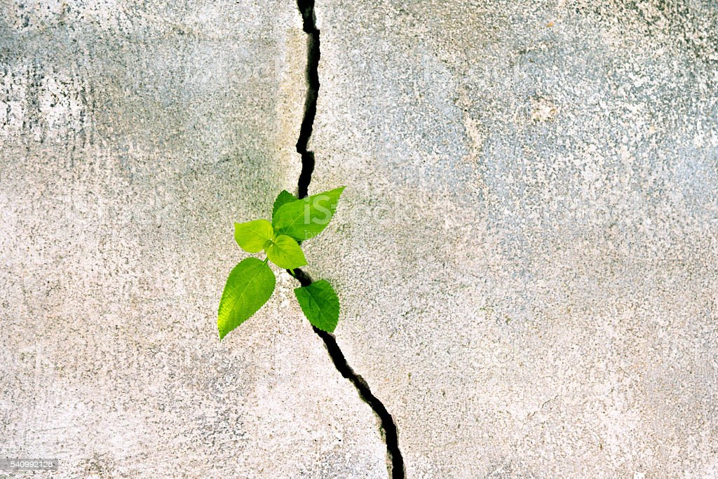 plant growing in a concrete wall stock photo more pictures of achievement istock. Black Bedroom Furniture Sets. Home Design Ideas
