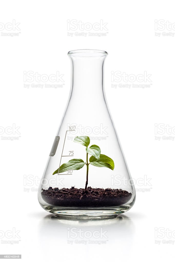 Plant growing in an Erlenmeyer flask - Nature Genetics Growth royalty-free stock photo