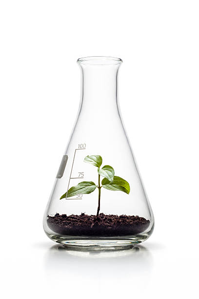plant growing in an erlenmeyer flask - nature genetics growth - beaker stock photos and pictures
