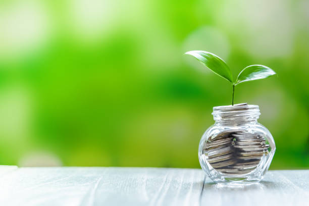 Plant Growing In Coins stock photo