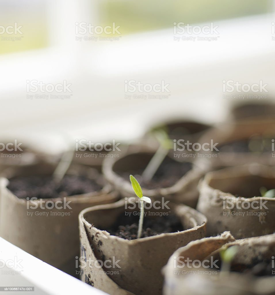 Plant growing in pot. Lizenzfreies stock-foto
