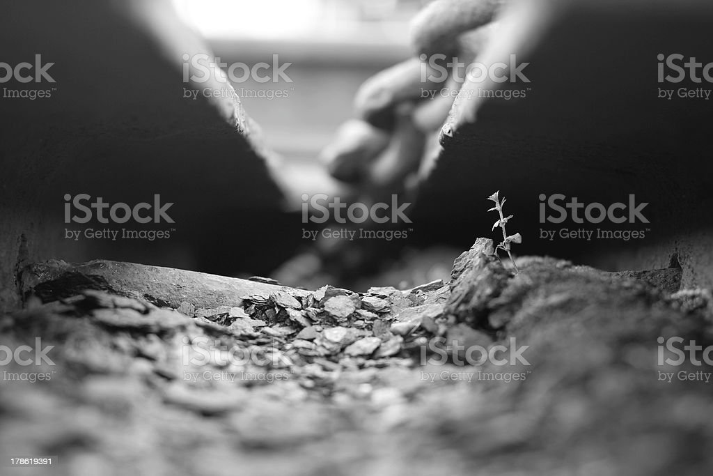 Plant growing in rocks royalty-free stock photo