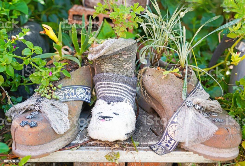 Lastik çizmeler Amasra City, Türkiye'nin büyüyen bitki stok fotoğrafı