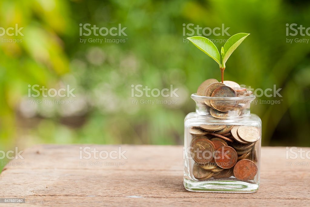 Plant Growing In Savings Coins on wooden. stock photo