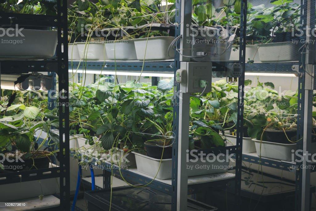 Ferme Intérieur De Dans Droit Plante Libre Photo Poussant Smart H2DWE9I