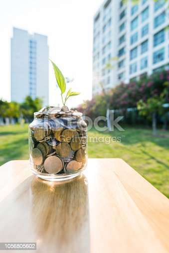 Plant growing in the glass jar with coins.
