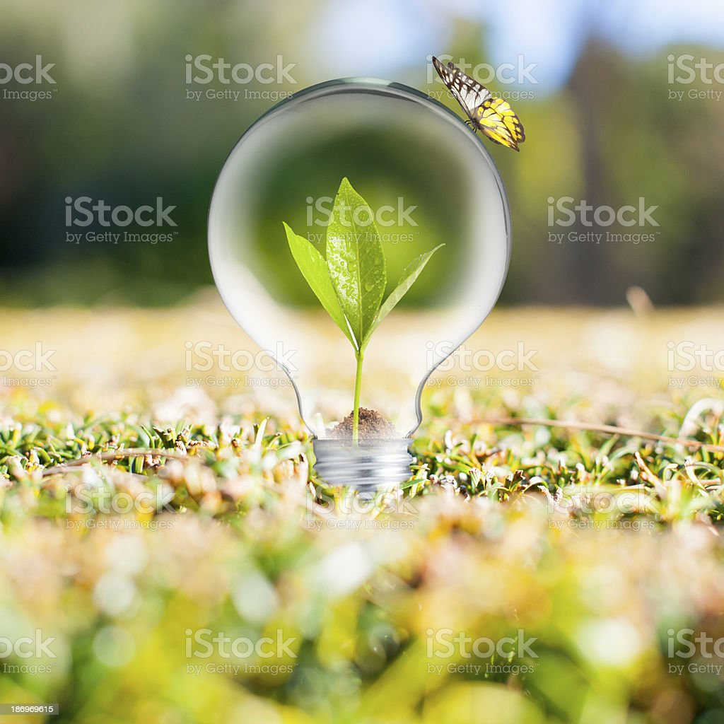 Plant growing inside light bulb with bird stock photo