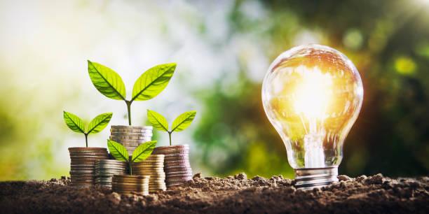 Pflanze wächst auf Münzen und Glühbirne. Konzept spart Geld mit Energie – Foto