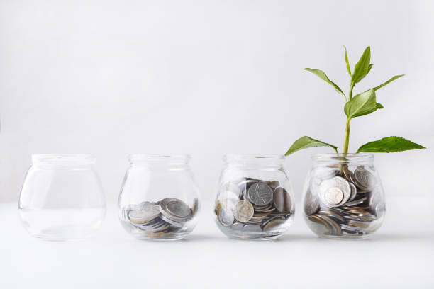 Plant growing on coins in glass jar stock photo