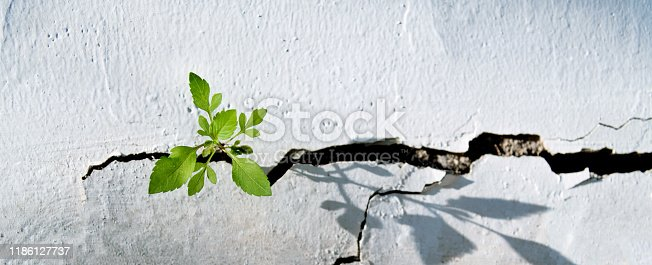 Plant growing on concrete wall.