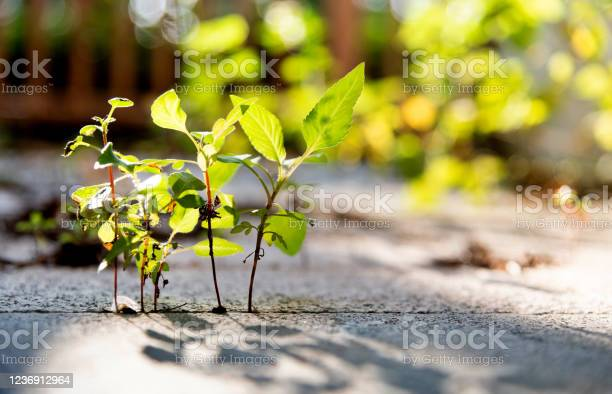 Photo of Plant growing on stone footpath