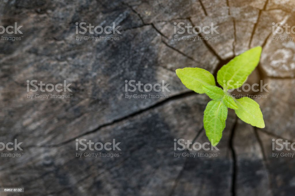 Plant growing on wood in springtime stock photo
