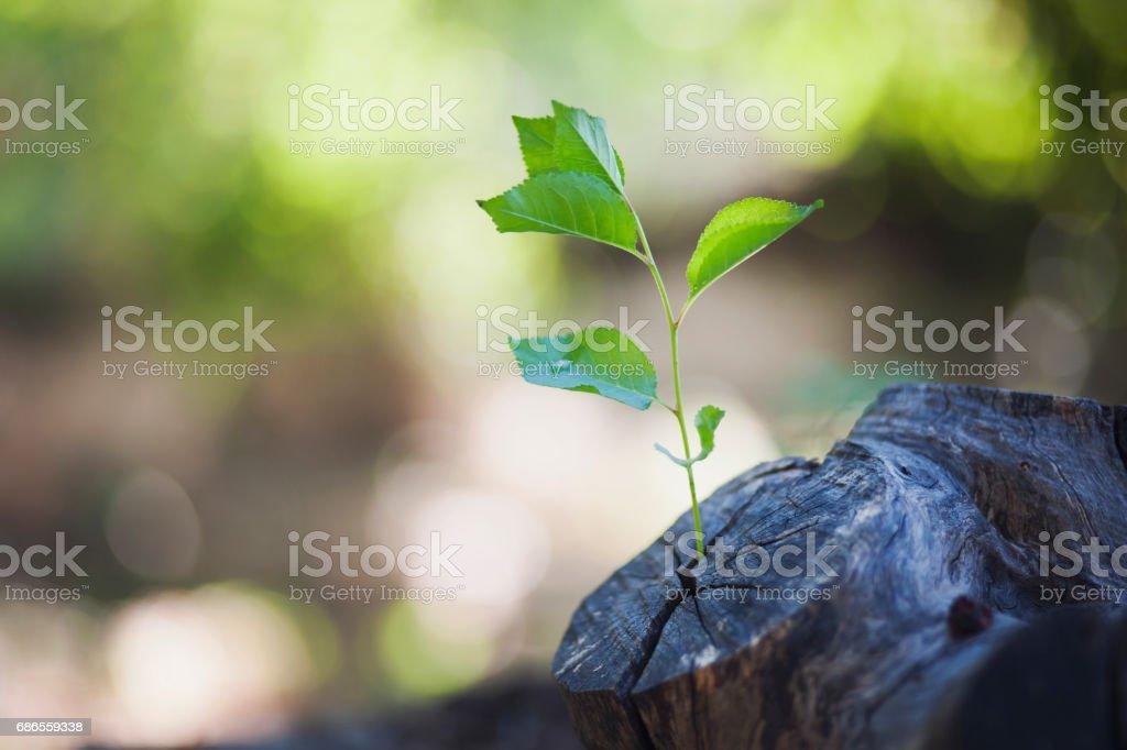 plant growing out of a tree royaltyfri bildbanksbilder