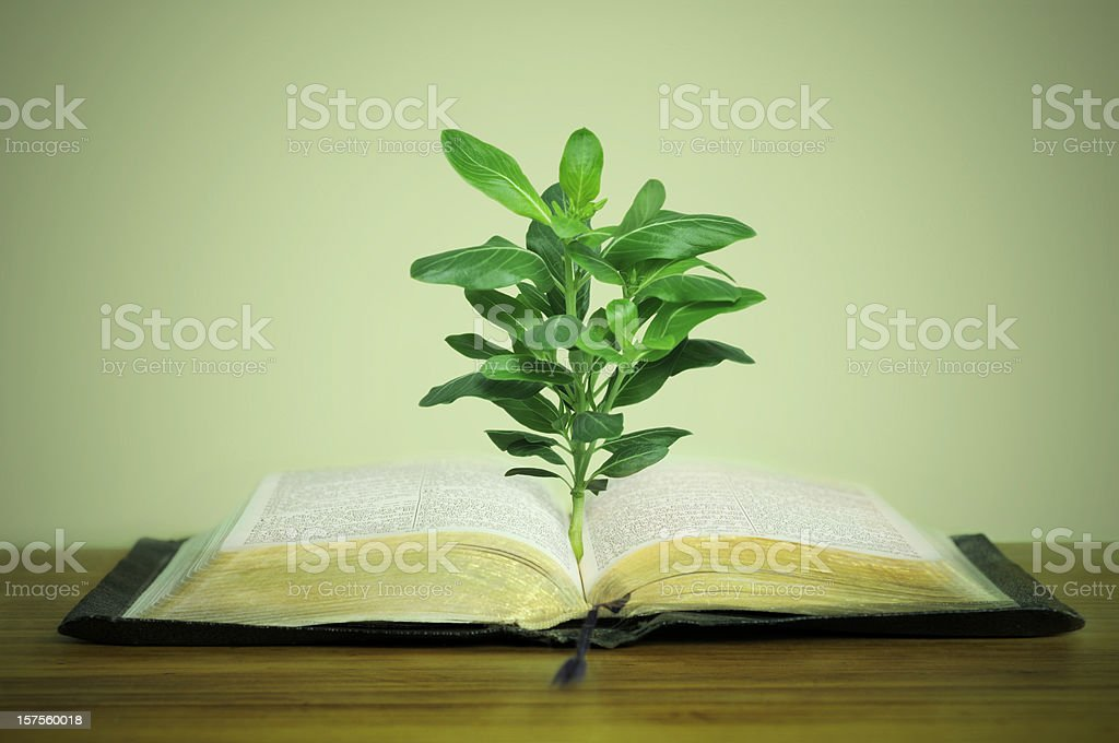 7509b7a266309 Plant Growing Out Of Old Book Stock Photo & More Pictures of Antique ...
