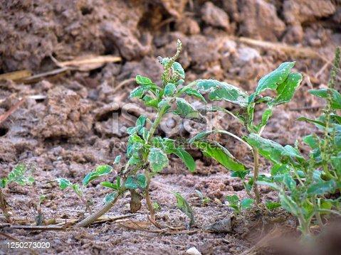 Uma planta crescendo no barro.