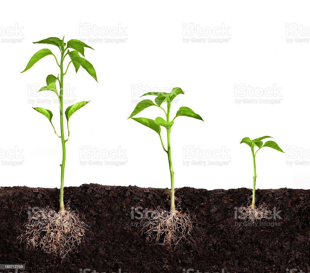 plant growing stock photo