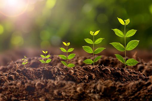 Plant Growing 照片檔及更多 園藝 照片