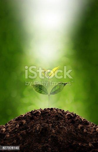 istock Plant Growing 827328140