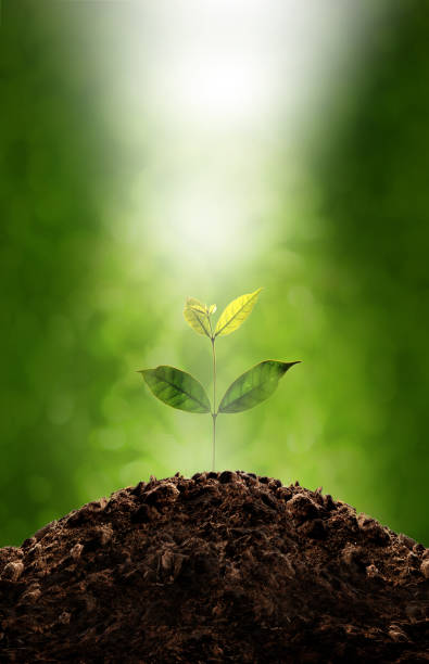 plant growing - water born nature imagens e fotografias de stock
