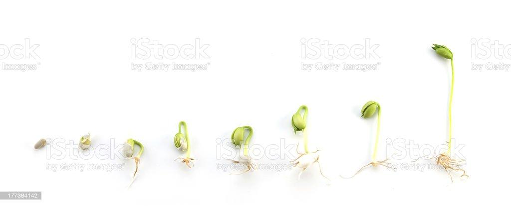 De croissant séquence - Photo