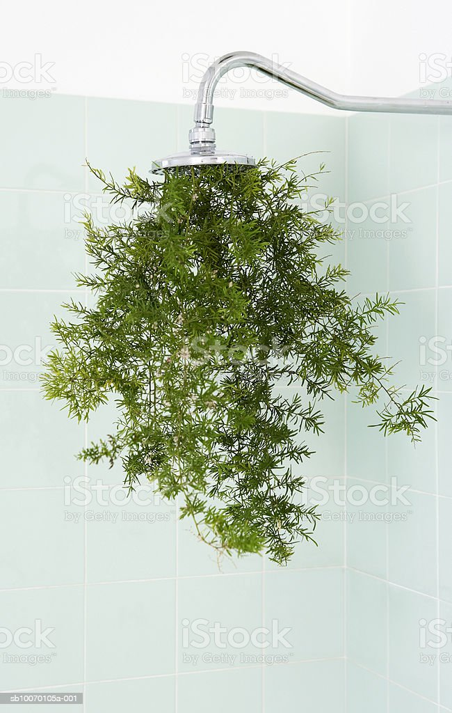 Plant growing through bathroom shower royalty-free stock photo