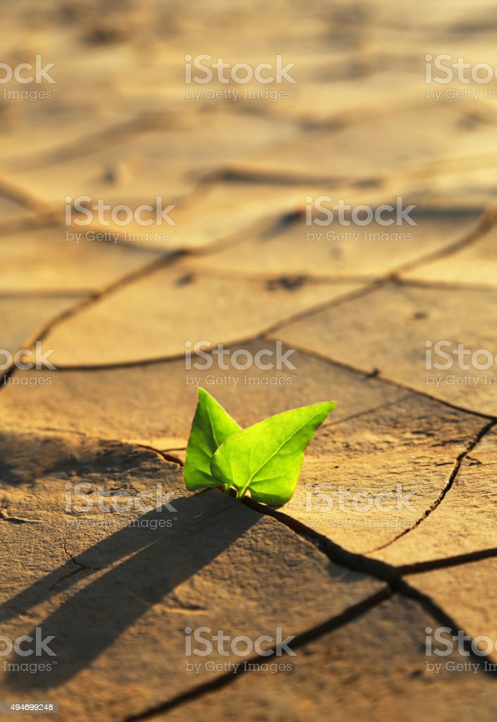 Plant growing through dry cracked soil stock photo