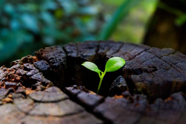 plant groeit door middel van romp van boomstronk - herbebossing stockfoto's en -beelden