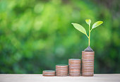 Plant growing up on the growing coin stack with nature background for financial growing concept
