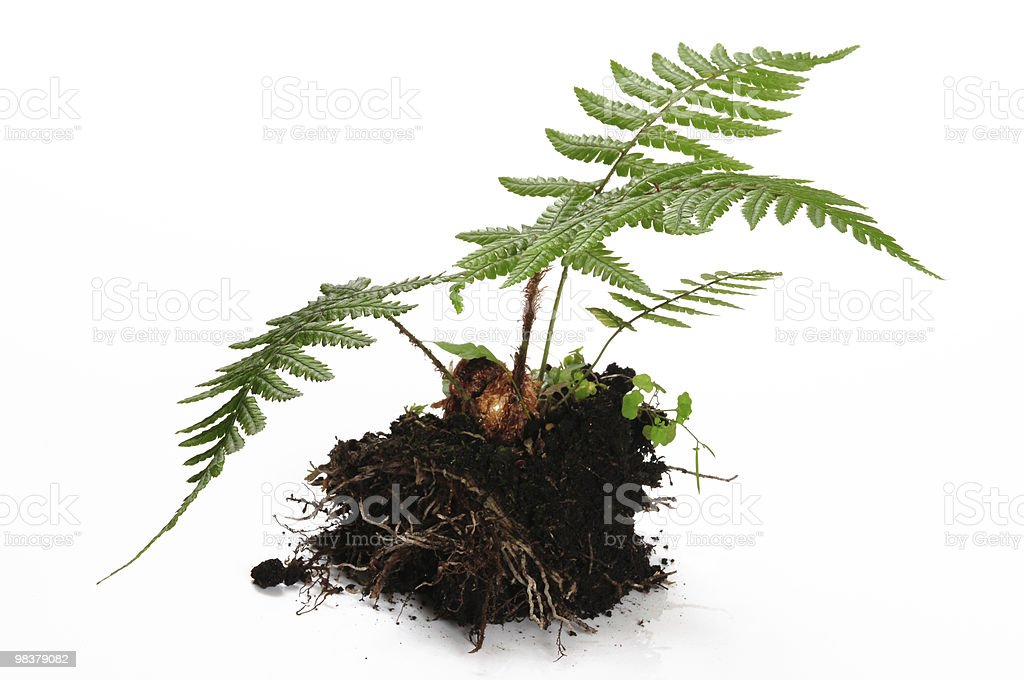 Plant. Growth concept. royalty-free stock photo