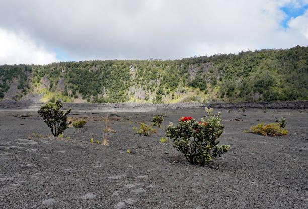 Plant growth in the Kilauea Iki stock photo