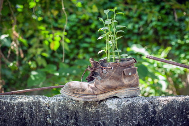 Plant growth in the old shoe, green background stock photo