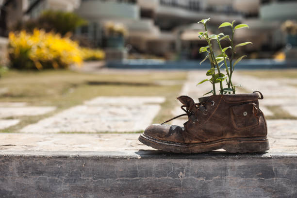 Plant growth in the old shoe in the garden stock photo