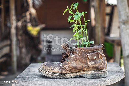 Old shoe with plant on the wooden desk