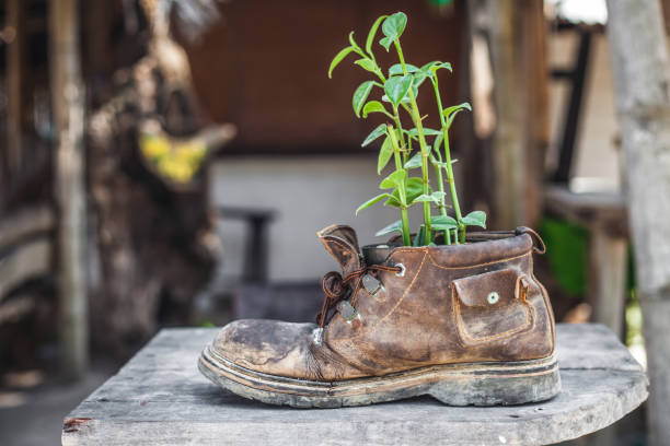 Plant growth in the old shoe on the backyard stock photo