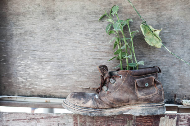 Plant growth in the old shoe on wooden background stock photo