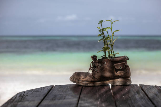 Plant growth in the old shoe on wooden table stock photo