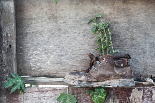 Plant growth in the old shoe stock photo