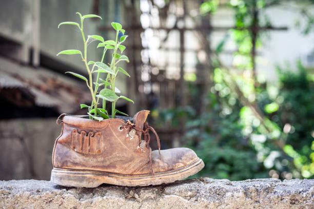 Plant growth in the old shoe standing on the stone wall stock photo