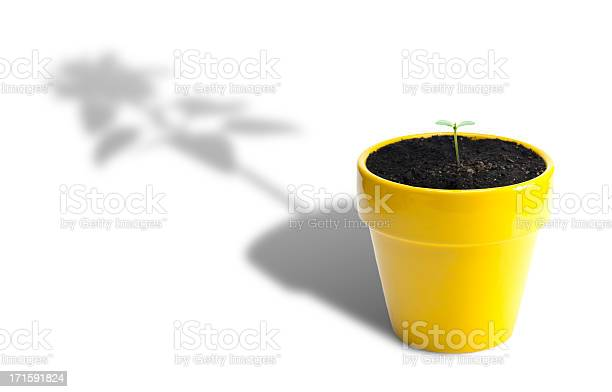 Plant growth picture id171591824?b=1&k=6&m=171591824&s=612x612&h=dqjy6kezzadgra8bsnoywlhyhdu6 e6hlynjlwhrziy=