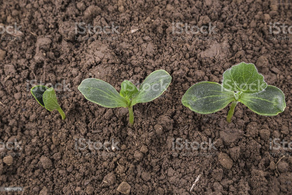 plant growth sequence in above angle stock photo