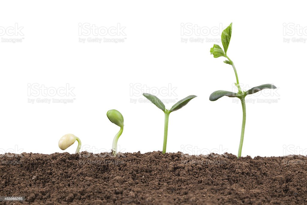 Plant growth Sequence in dirt isolate on white background stock photo