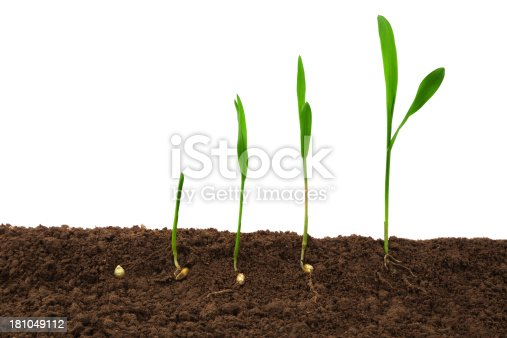 147512291 istock photo Plant growth Sequence with root in dirt 181049112
