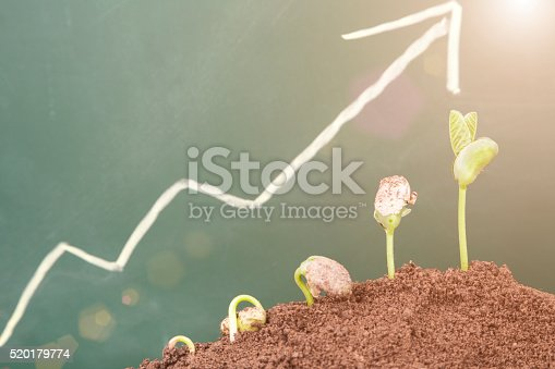 plant growth sequence:new life growing in spring
