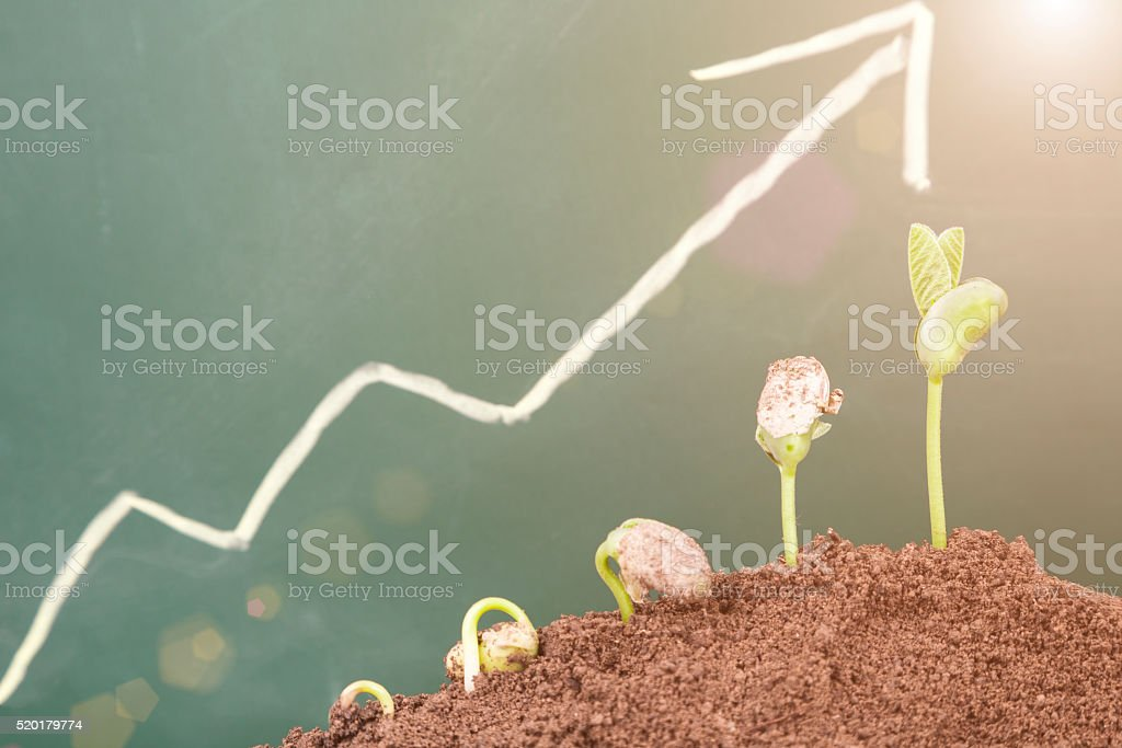 plant growth sequence:new life growing in spring stock photo