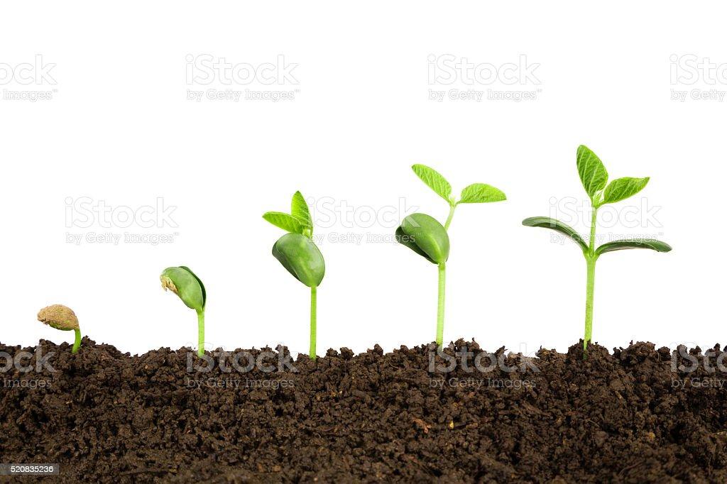 Resultado de imagem para crescimento de plantas