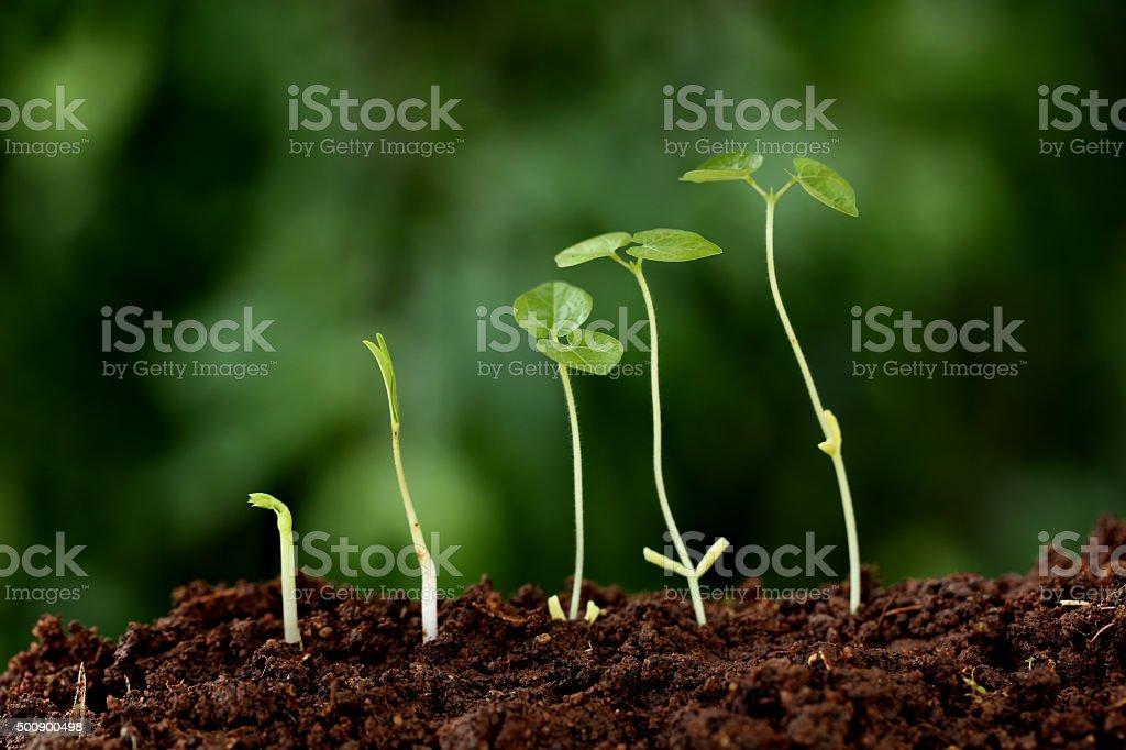 Plant growth-New beginnings stock photo