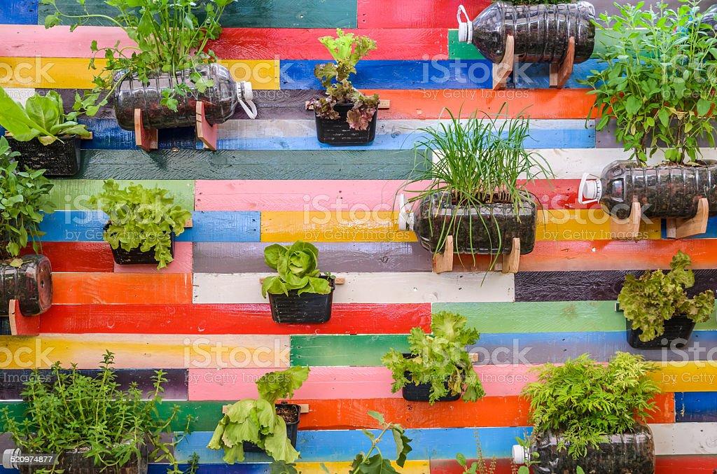 Plant Kräuter in Töpfen hängen an der Wand – Foto