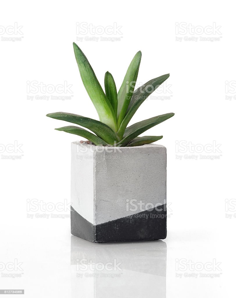 Plant in a concrete painted cubic pot stock photo
