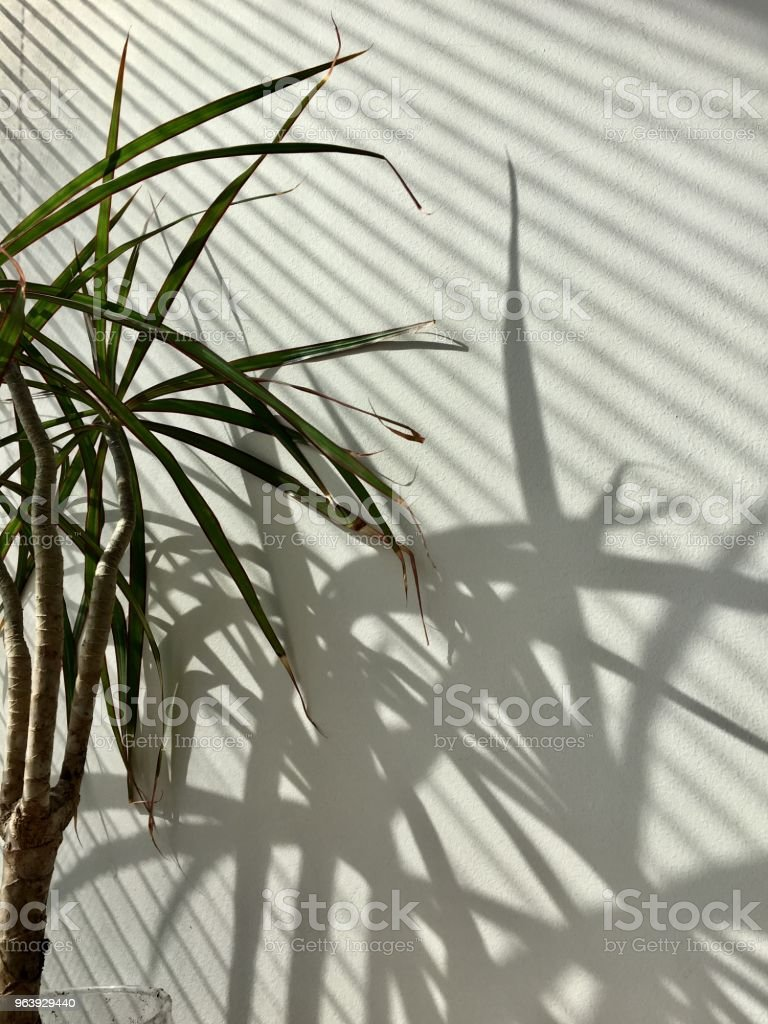 Plant in a Office - Royalty-free Close-up Stock Photo