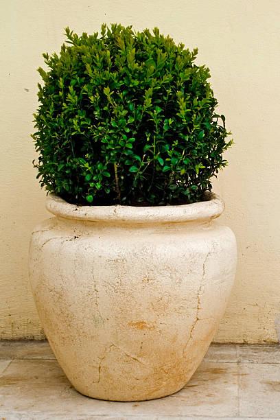 pflanze in der große keramischen topf - blumentopf groß stock-fotos und bilder